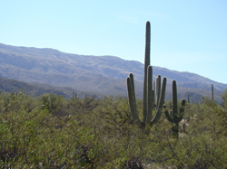 Tucson: Saguaro National Monument East